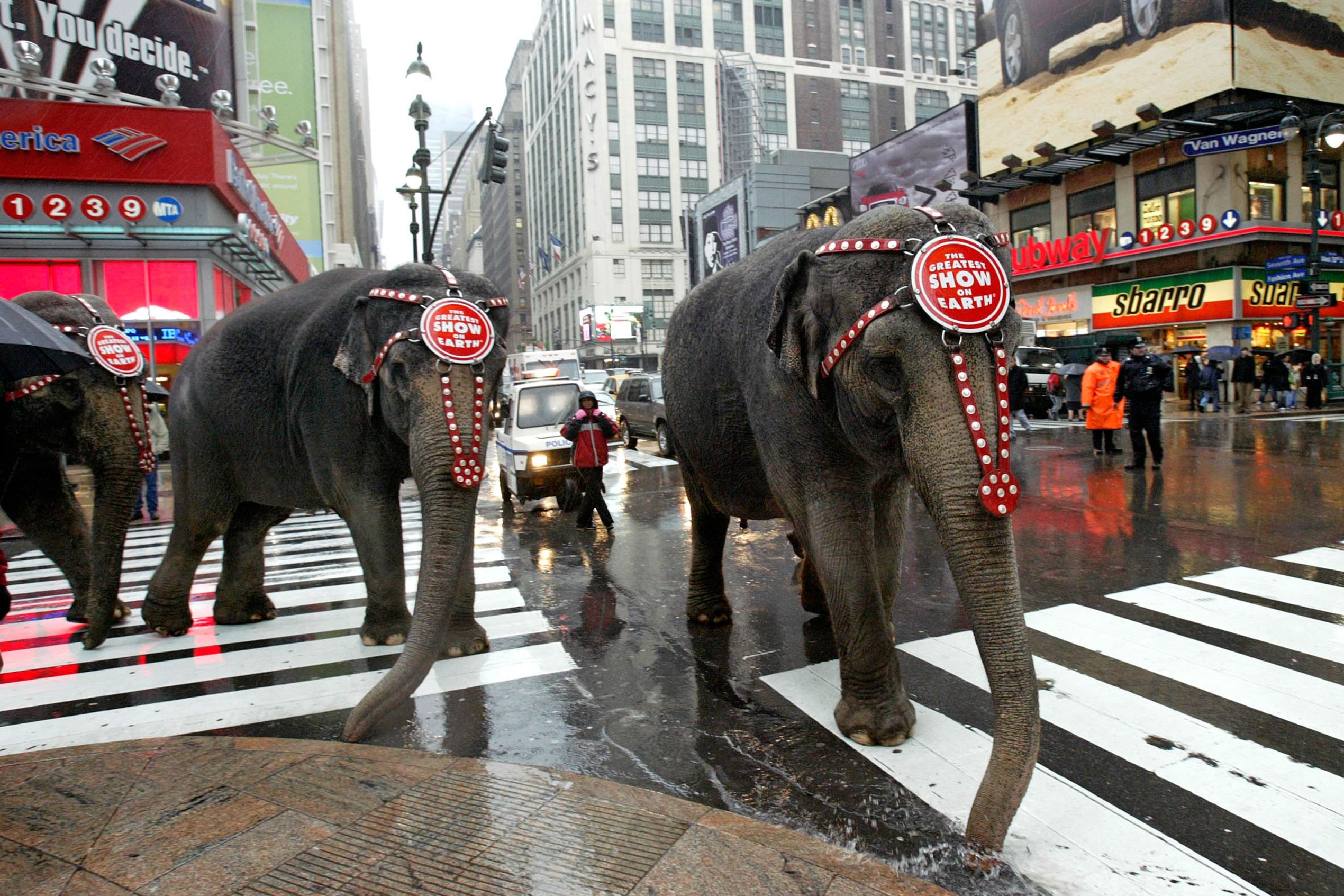 Protests That Made Companies Change Their Ways Public Space Ringling Brothers Circus Circus Animals