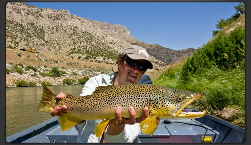 A Big Wind River Brown Trout In Thermopolis Wyoming Trout Fishing Tips Fishing Photography Fly Fishing