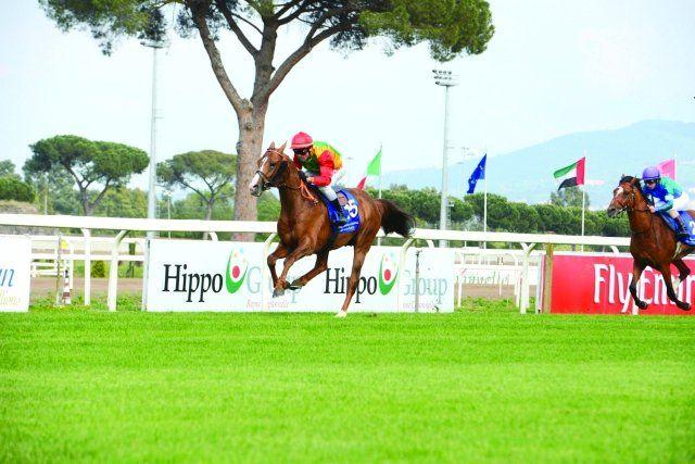 سباق دبي الدولي للخيول العربية ينال اعتراف إيفار Arabian Horse Horses Arabians