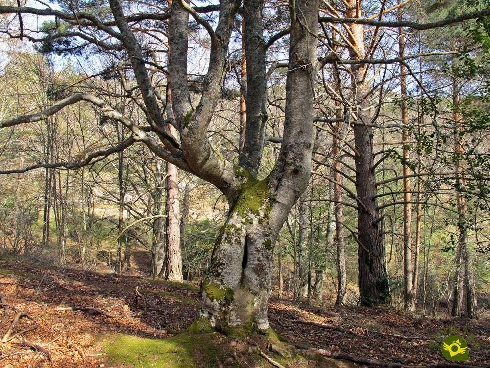 Link GR 93 GR 190 Ortigosa de Cameros-Rock Hincada  | Hiking Routes in La Rioja Information on the