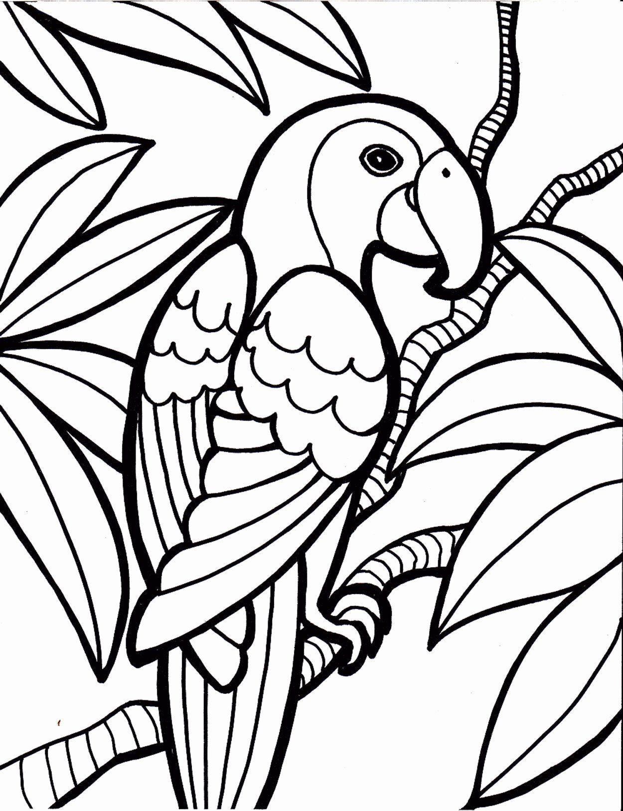 Coloring Bird Toys Elegant Rainforest Birds Coloring Pages Bird