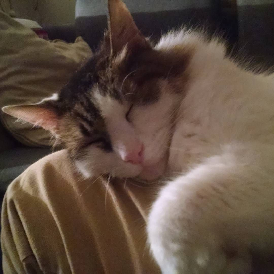 Me mata de amor #friends #love #sweetness #instapics #cats #chats #catsoninstagram #weeklyfluff #catsofinstagram #pets #naptime