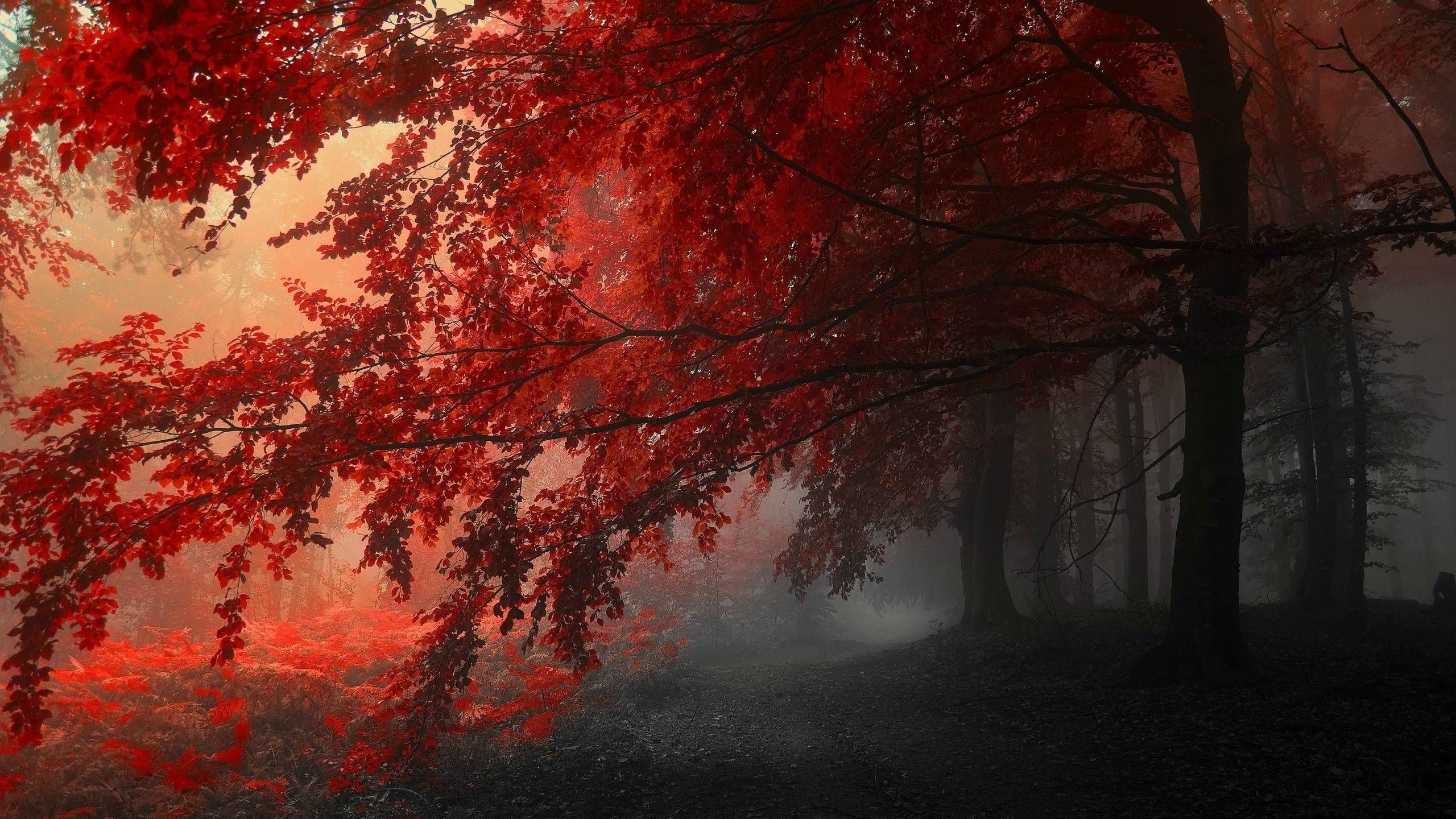 Red Forest (With images) Tree hd wallpaper
