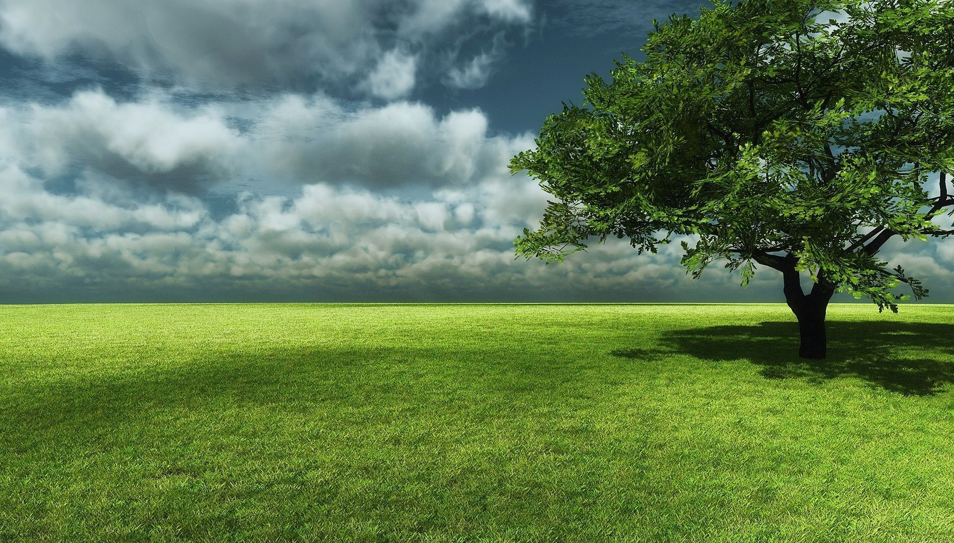 Big Tree With Grass Field Landscape Wallpaper Wallpaper