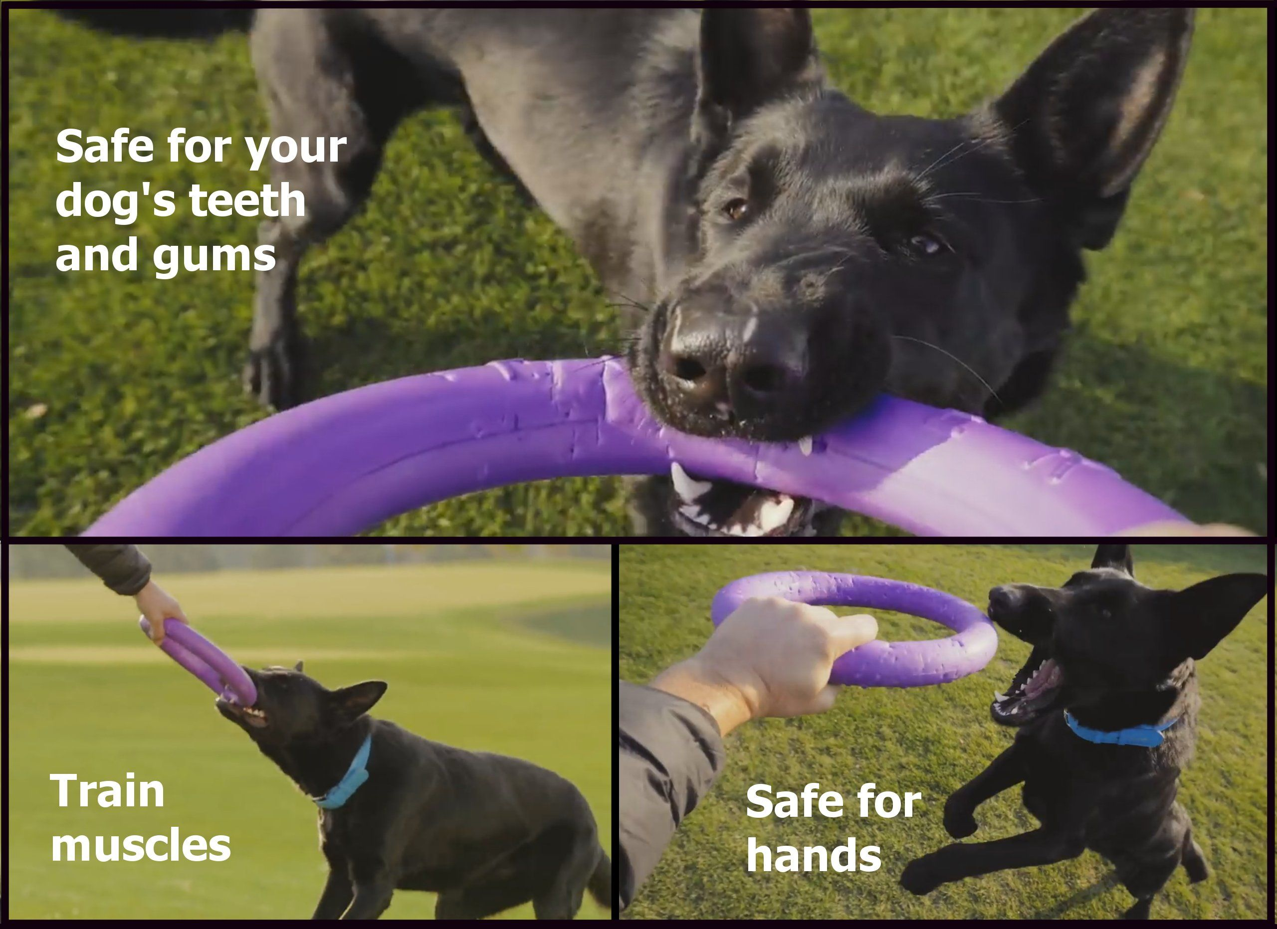 Puller Standard Training Toy For Dogs Two Fetch Rings A Toy For