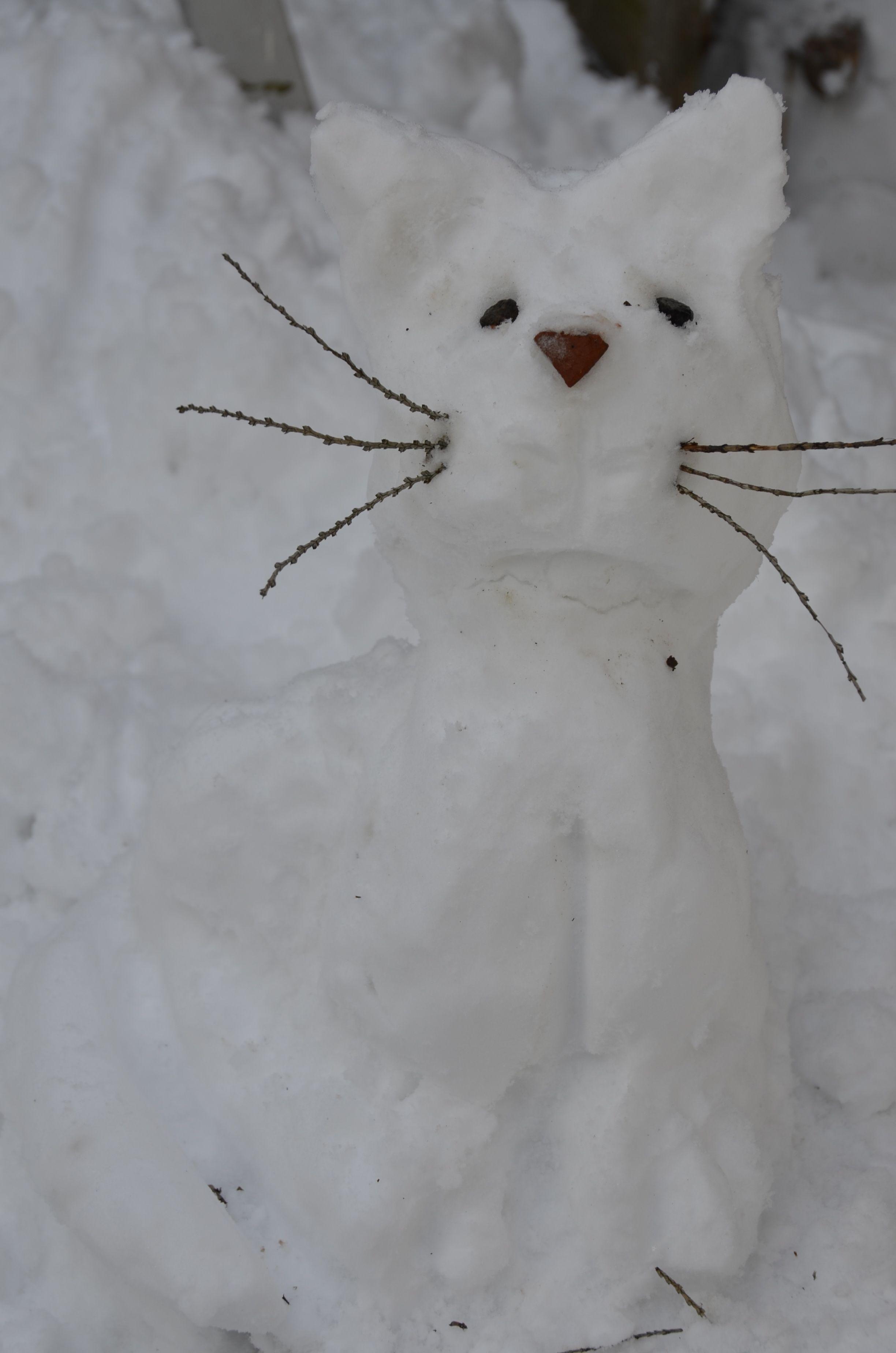 Snowcat/Chat de neige