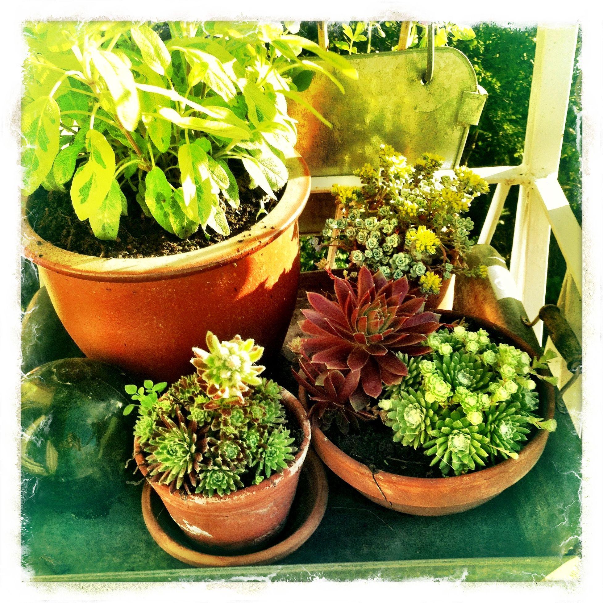 Growing on my balcony...