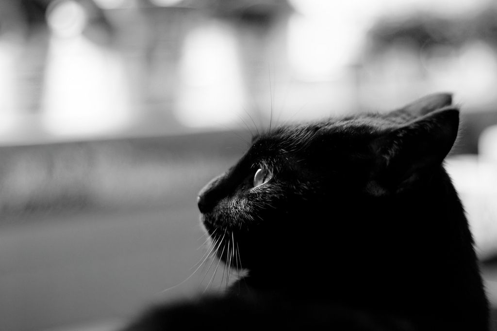 Cat in black and white | by Digital Adrian