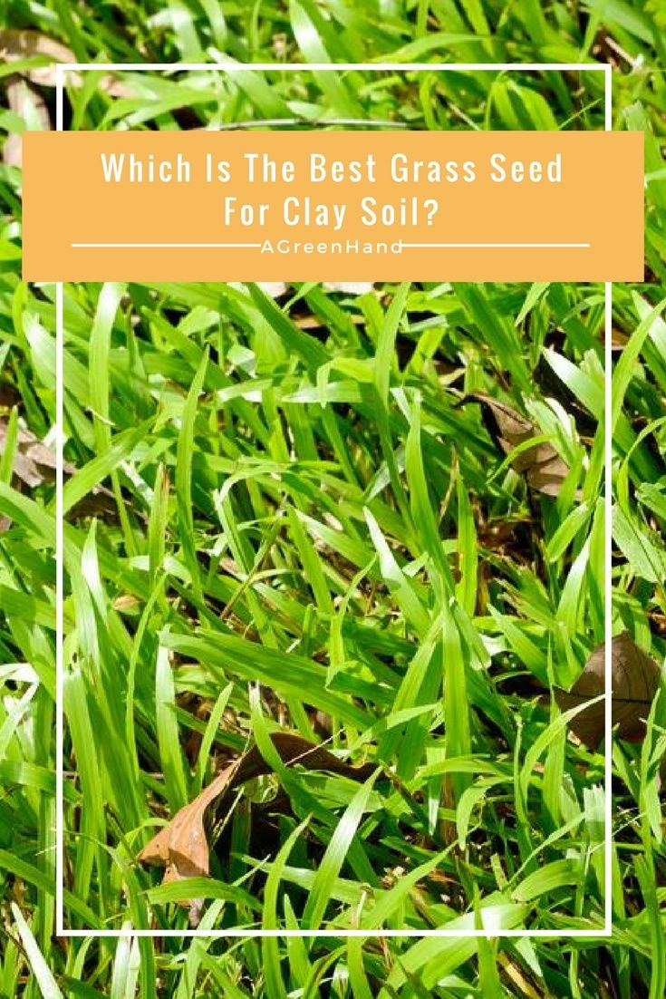 Which Is The Best Grass Seed For Clay Soil Create Your Very Own Green Lawn Best Grass Seed Best Grass Seed Lawn Grass Seed