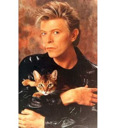 Bowie_with_cat