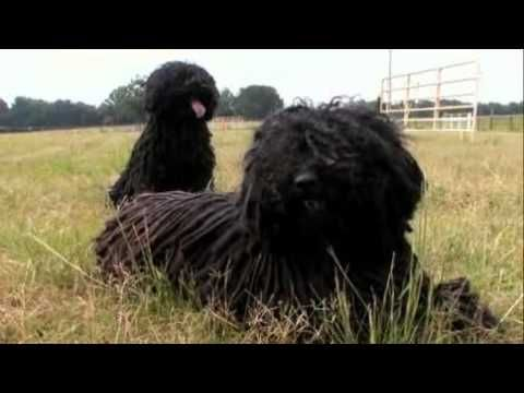 Dogs 101 02 07a Puli Webrip Lks 1 Mkv You