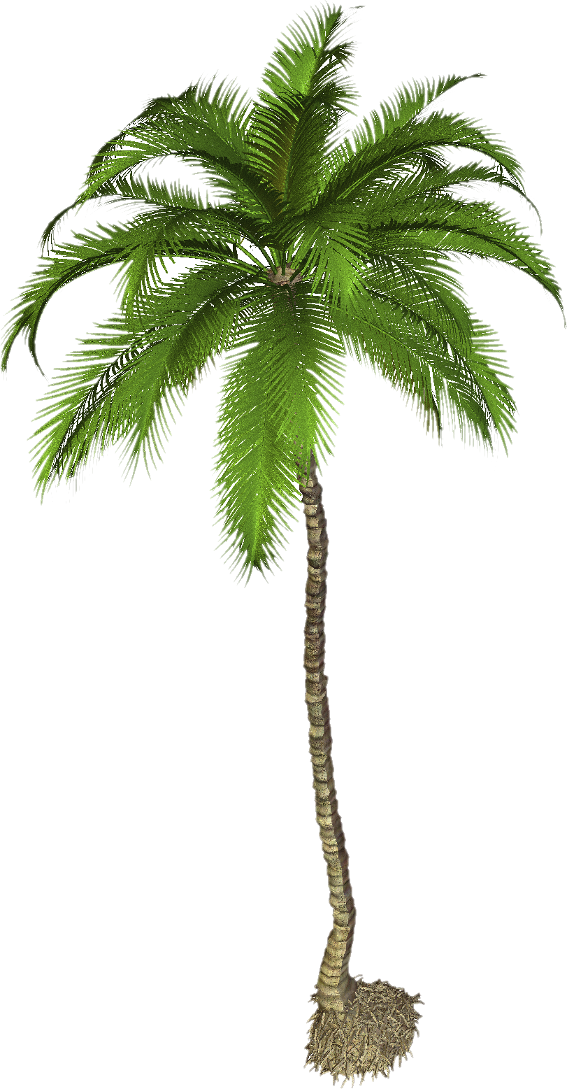 Palm Png Palm Tree Png Palm Trees Painting Palm Tree Images