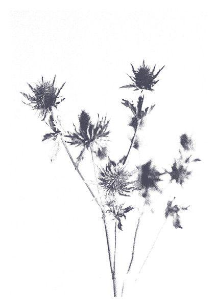 ARTPRINT graue Distel | FineArt Poster | Disteln, Schlicht und Drucken