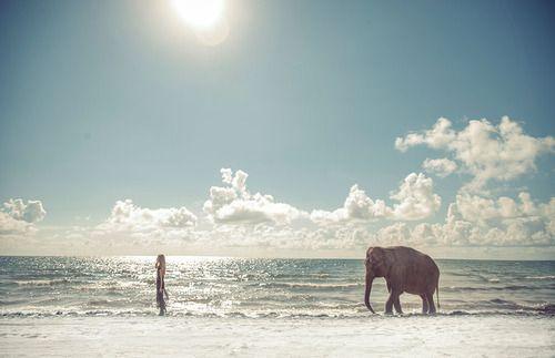 Ocean, beach, elephant, encounter