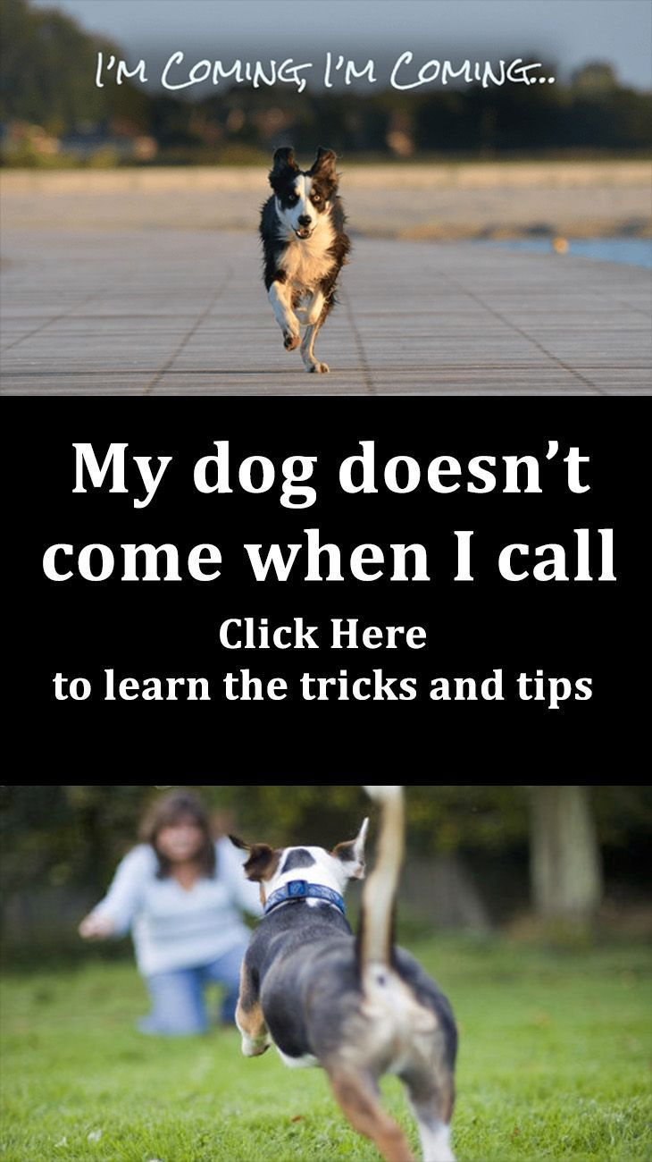 Why my dog doesnut come when i call here is how you teach him to
