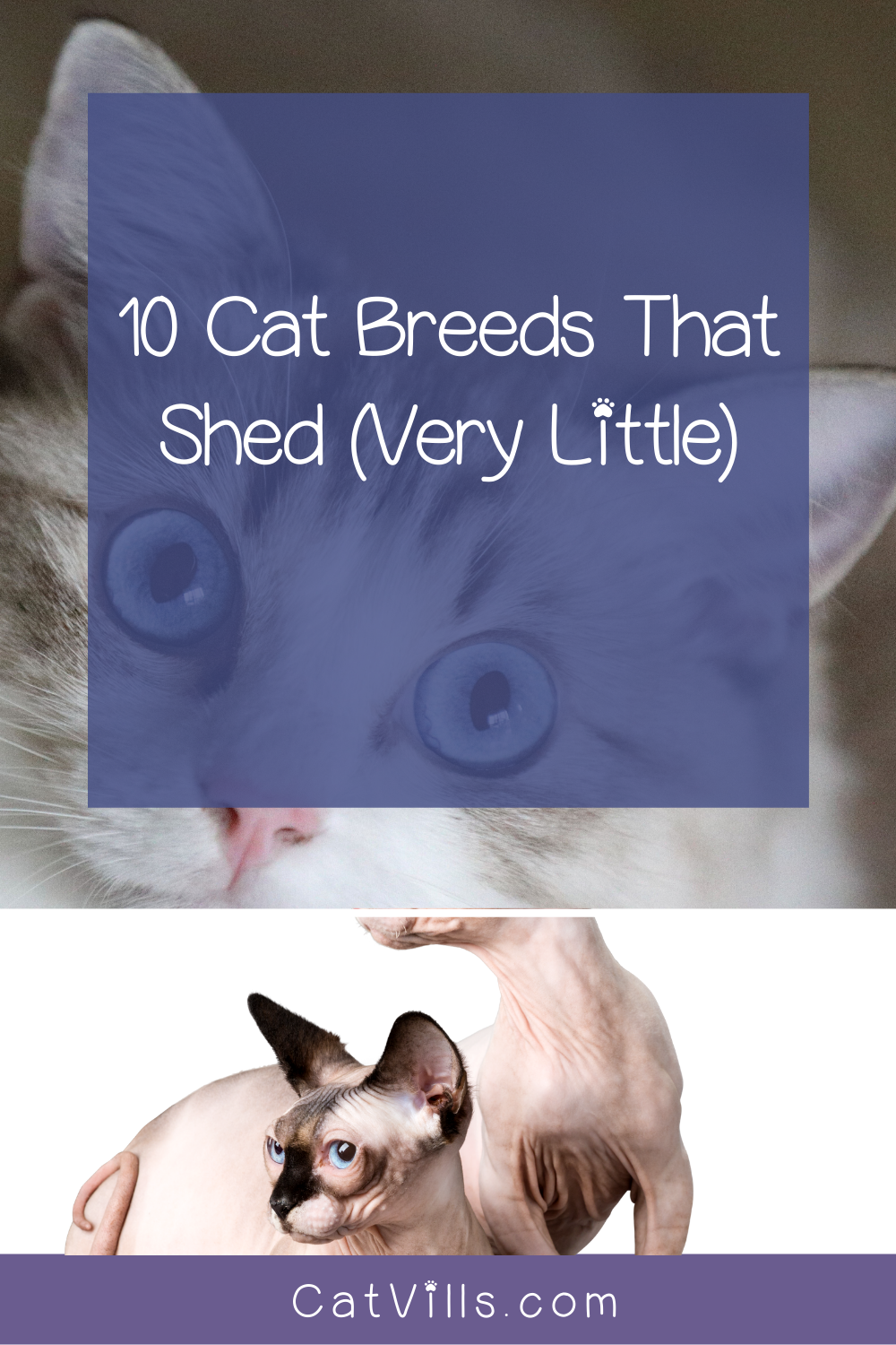 10 Cat Breeds That Don T Shed Much In 2020 Cat Breeds Best Cat Breeds Cats