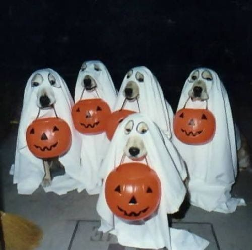 Doggy Ghosts dogs halloween ghosts halloween pictures happy halloween halloween images