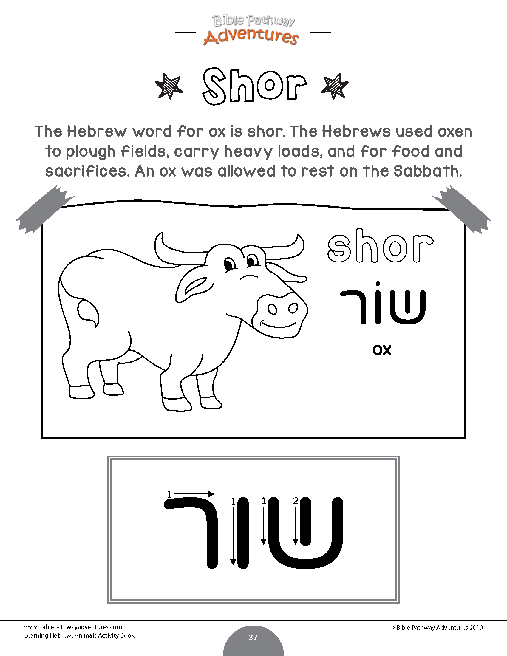The Hebrew Word For Ox Is Shor