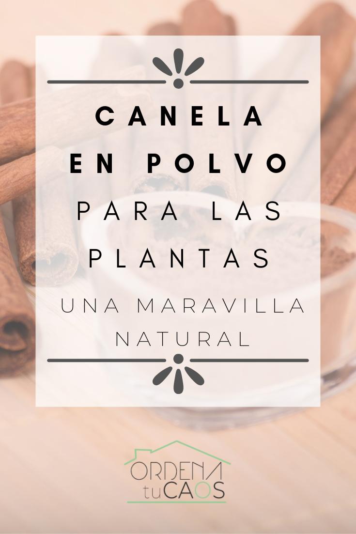 CANELA EN POLVO PARA LAS PLANTAS – UNA MARAVILLA NATURAL