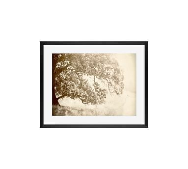 Origins Framed Print by Lupen Grainne