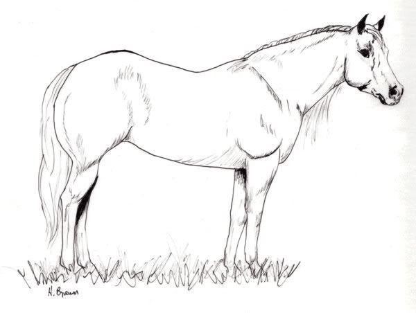 quarter horse head coloring page 48572 movieweb