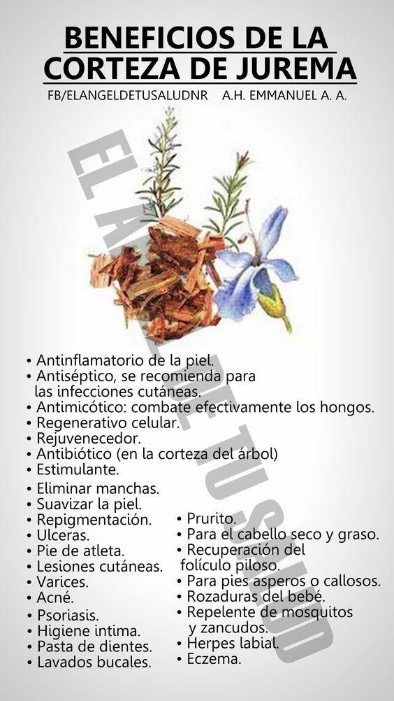 Pin By Maria On Natural Como La Vida Misma In 2020 Herbal Medicine Green Juice Smoothie Medicinal Plants