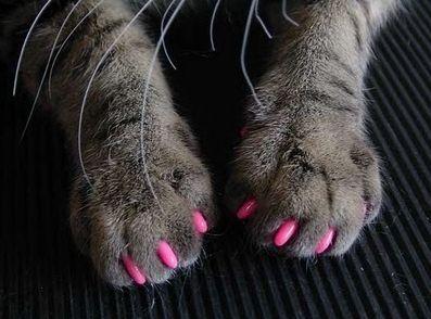 kitty nails i ve