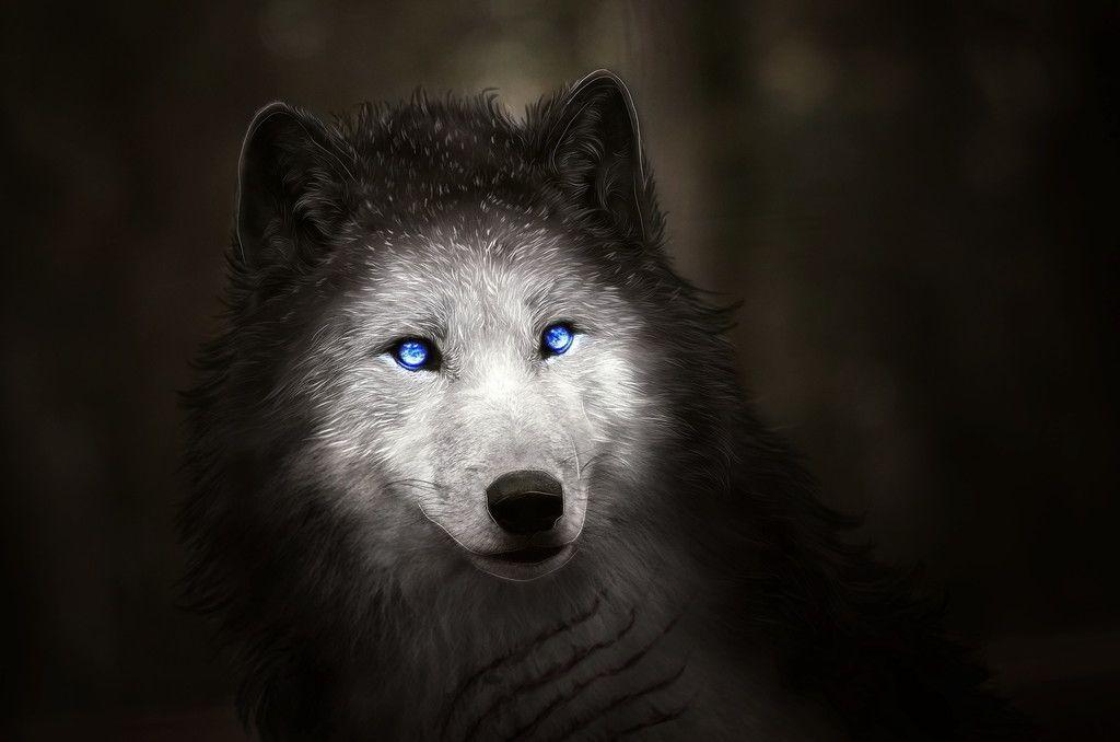 Blue Eyes Wolf Muzzle Art Wallpaper Com Imagens Pinturas 1080p Cores De Tinta