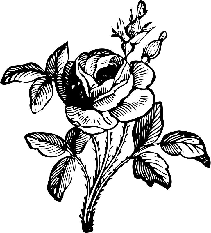 Flower Clipart Red Rose Flower Clipart Png 220 37 Kb