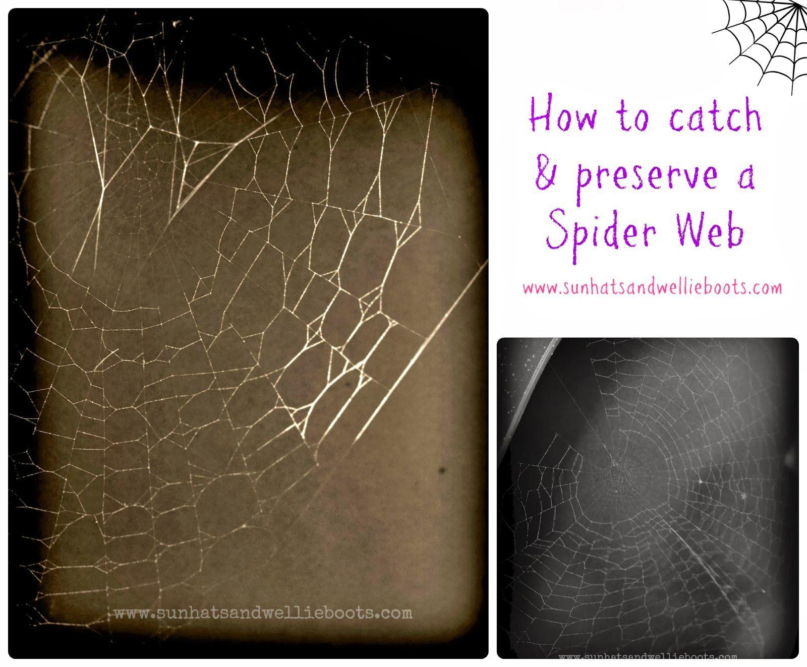 Catch And Preserve A Spider Web