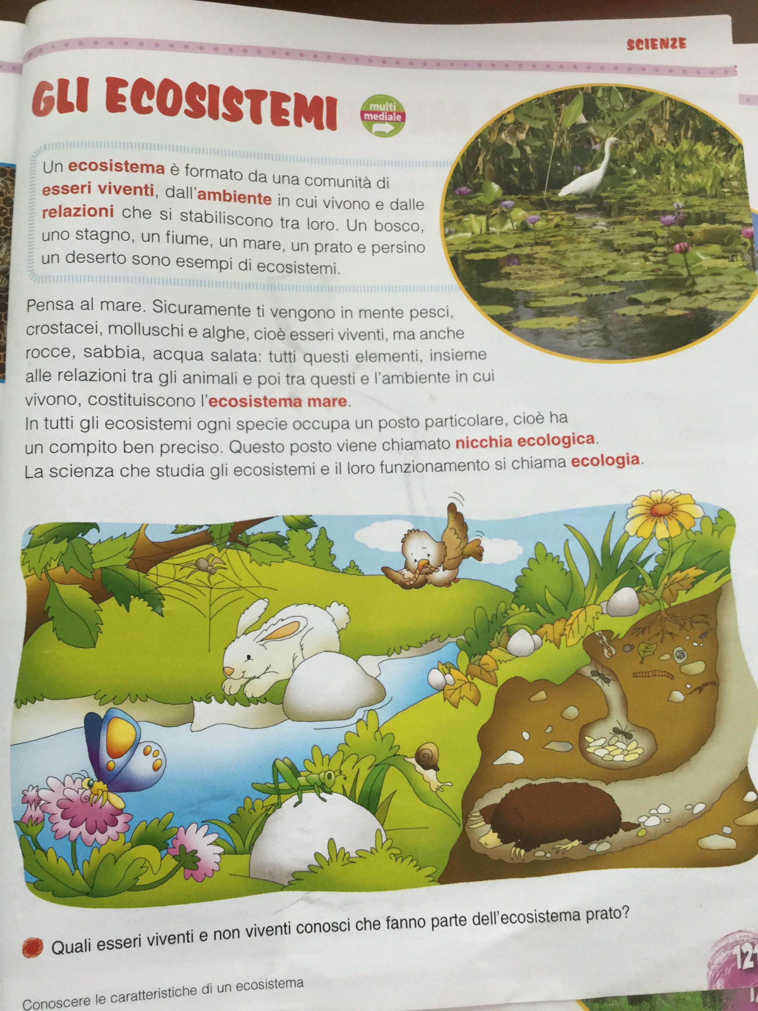 Gli Ecosistemi Scienze Pinterest