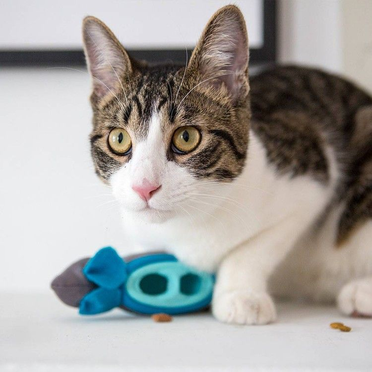 Feline Veterinary Experts Reach A Surprising Consensus Your Cat Will Be Happier And Healthier If You Stop Feeding From A Bowl Katzenworld Cat Care Cat Nutrition Cats