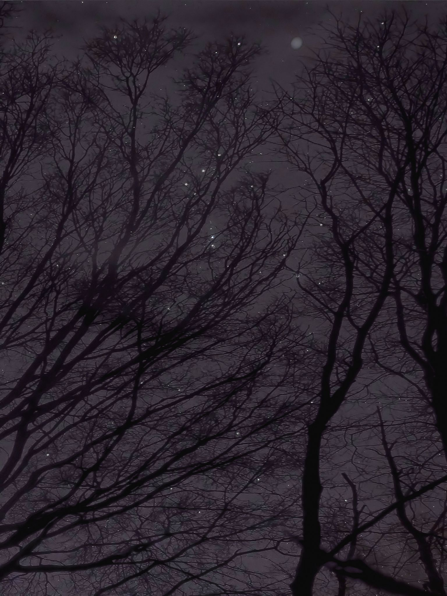 Orion\Trees | Flickr - Photo Sharing!