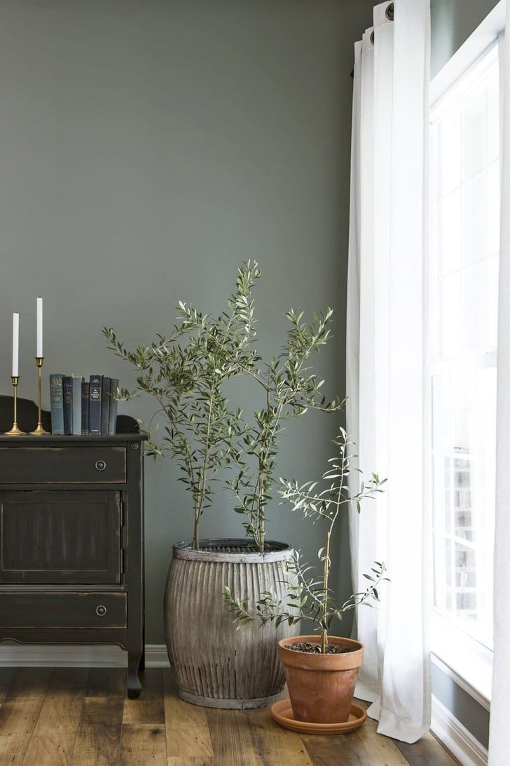 The 10 Plants You Should Be Decorating With, According to Joanna Gaines