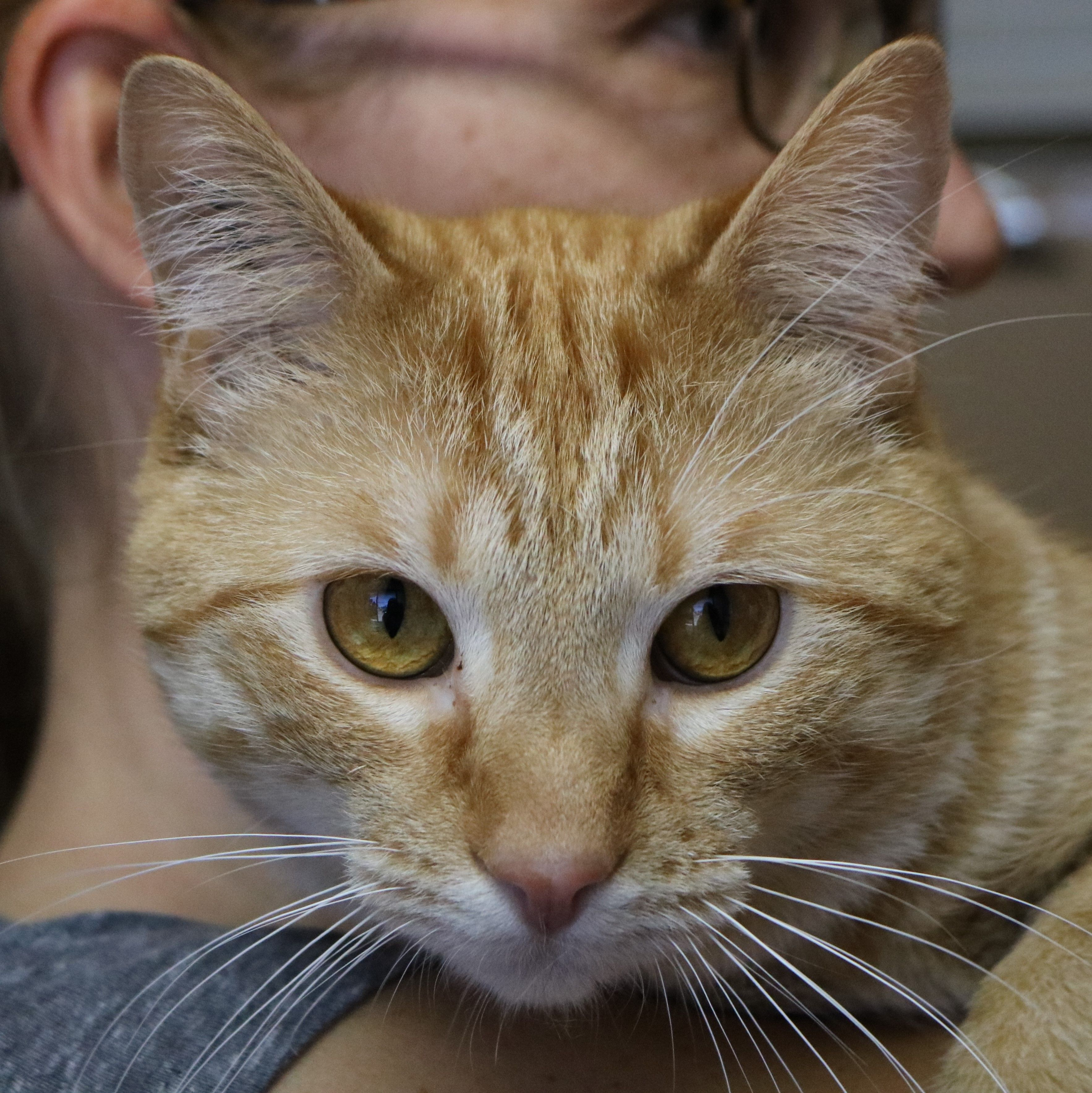 You can visit Totem at Pet Valu in Sunridge, he is a
