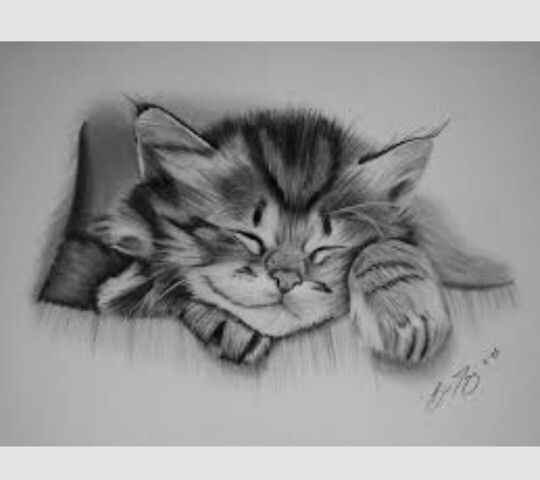 Cute cat drawing by grand rapids pencil artist brian duey more info