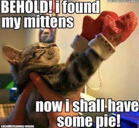 Behold I Found My Mittens Now I Shall Have Some Pie Funniest Cat Memes Funny Cats Funny Cat Memes