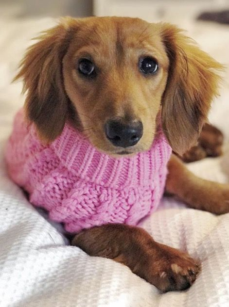 Dog Jumper Cable Knit Dog Jumpers Doxin Dog Dogs