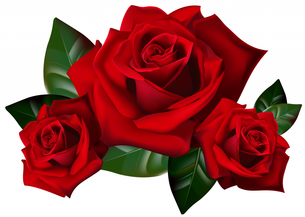 Top 25 Pictures Of Red Roses 03 With Transparent Background Hd Wallpapers Wallpapers Download High Resolution Wallpapers Rose Clipart Rose Art Red Rose Flower