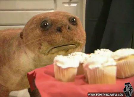 Crap taxidermy otter baccarat pete evans wok