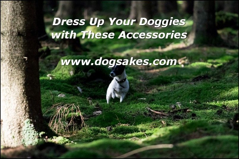 Interactive Dog Toys Why Organic Dog Food? - Dog Sakes
