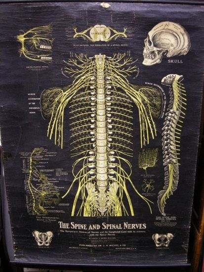 Antique Early 1900s Medical Pull Down Chart By