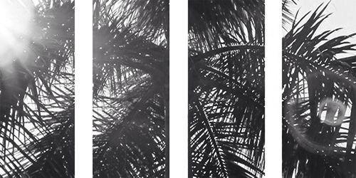 Palms Black And White Twitter Header White Twitter Header Facebook Cover Images