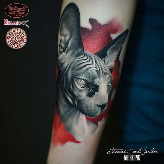 Super Sphynx Cat Tattoo | Tattoo | Pinterest | Sphynx cat tattoo, Sphynx  ZC28