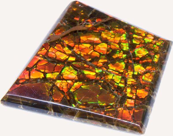 [ammolite-sample3.jpg]