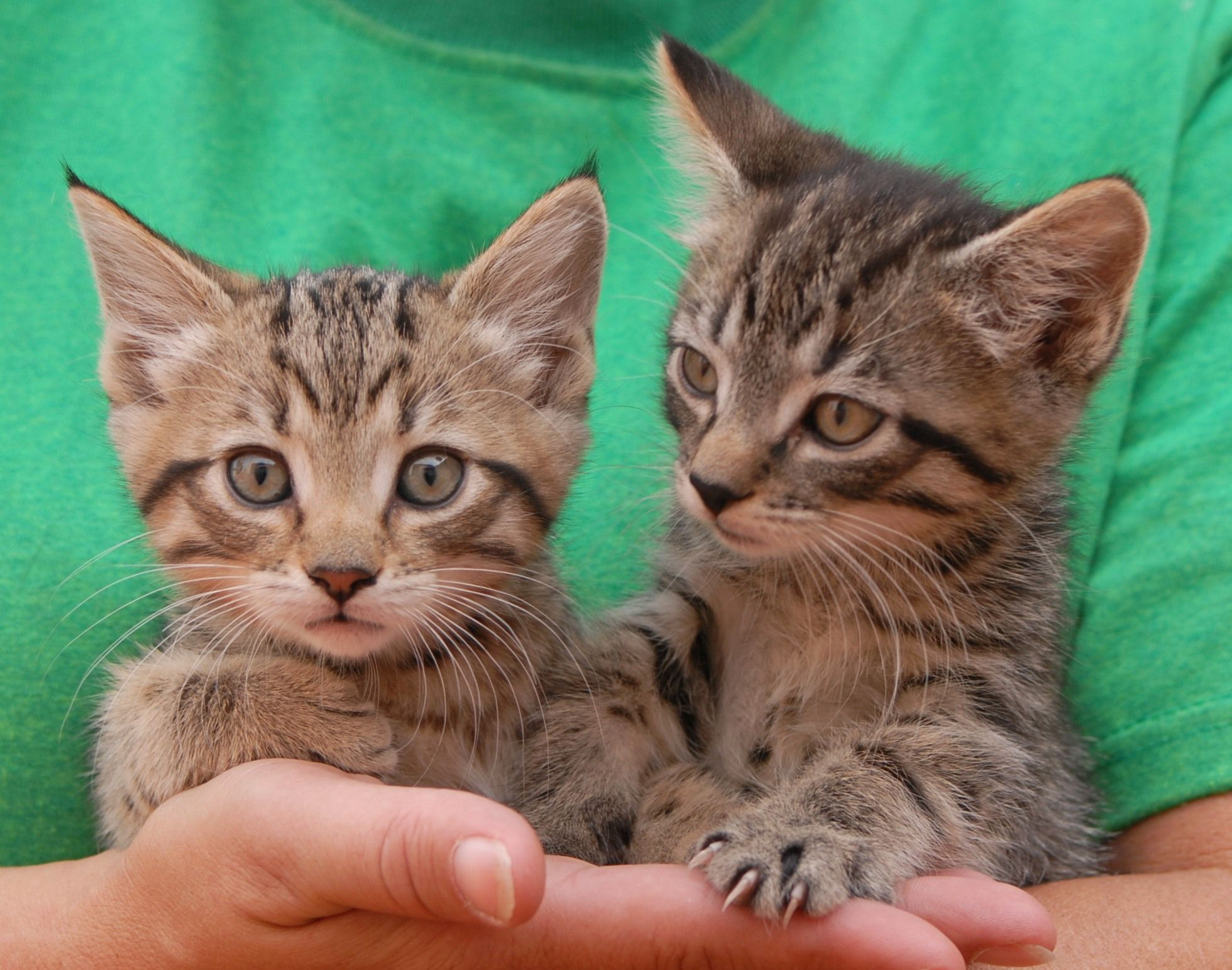 Madeline & Raccoon, sister and brother, are from a rescued