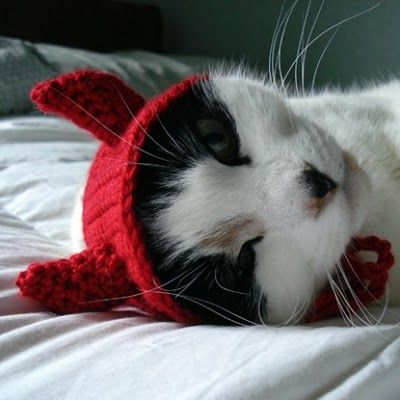 HALLOWEEN: Devil Kitty Crochet Hat. My cat needs one of these. my morris needs this lol