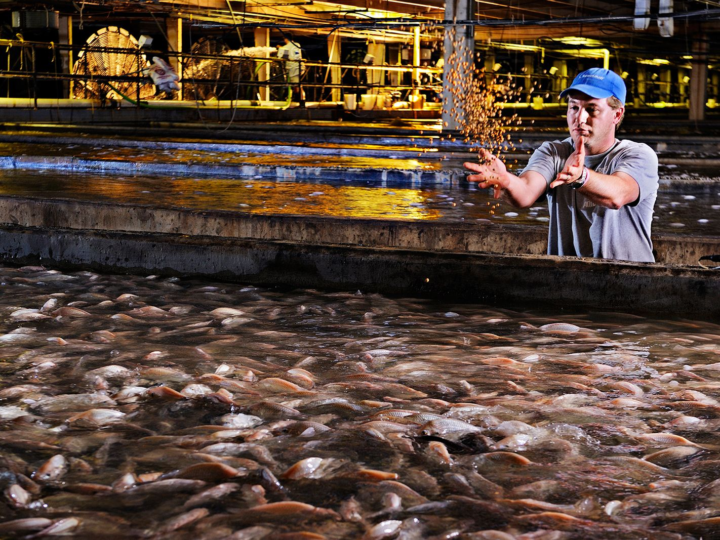 108 best fish farming images on pinterest fish farming
