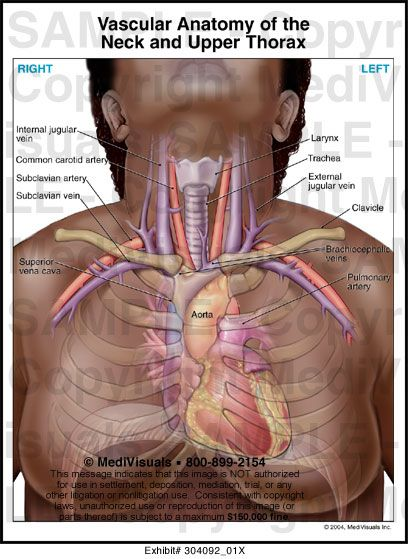 Neck vascular anatomy