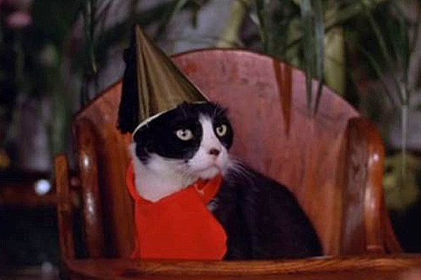Memorable Movie Cats The Sentinel 1977 Black And White Cat Black And White Cake Cat Day White Cat Cats